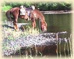 bevi-giovane-cavallo